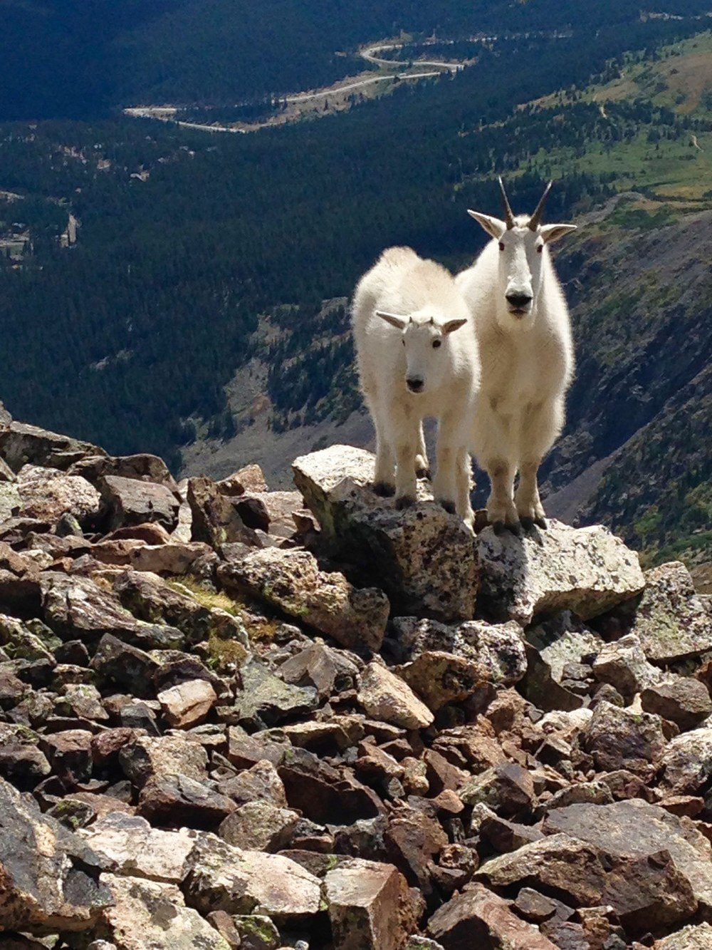 Breckenridge Denver Colorado Billy Goats Fourteener Quandary
