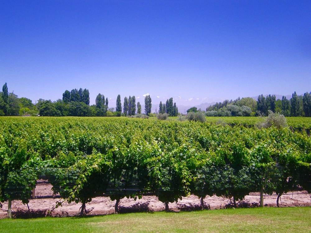 Mendoza Casarena Winery Argentina
