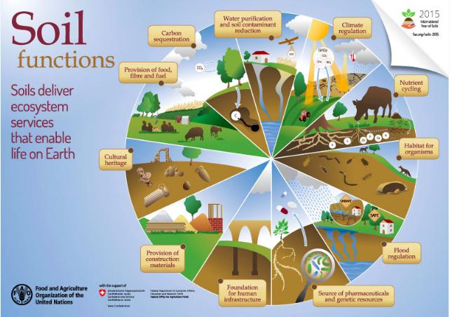 Source: FAO ( http://www.fao.org/soils-2015/en/ )