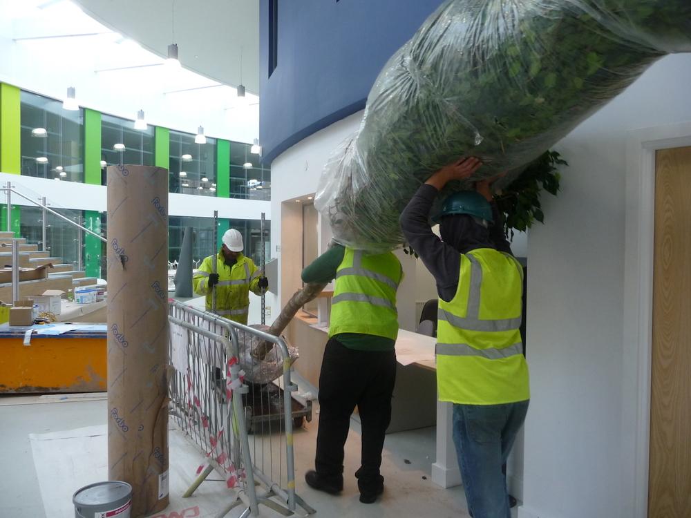 nailsea-school-plantcare-interior-plants-trees-bristol-cardiff-image-4