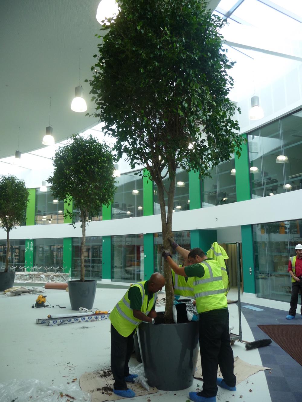 nailsea-school-plantcare-interior-plants-trees-bristol-cardiff-image-5