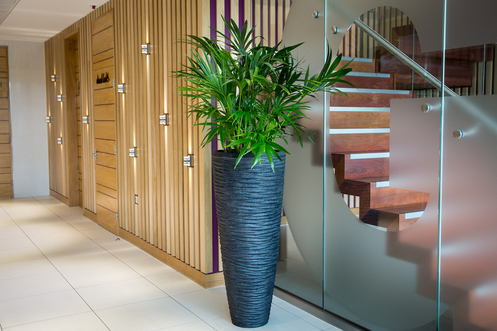 interior-plants-plantcare-bristol-cardiff-interiorscapes-eco-friendly-corporate-office-2