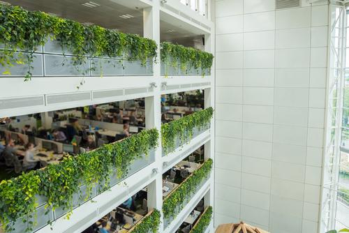 eco friendly corporate office going green ovoenergyplantcareinteriorplantsofficeecofriendly ovo energy rivergate plantcare