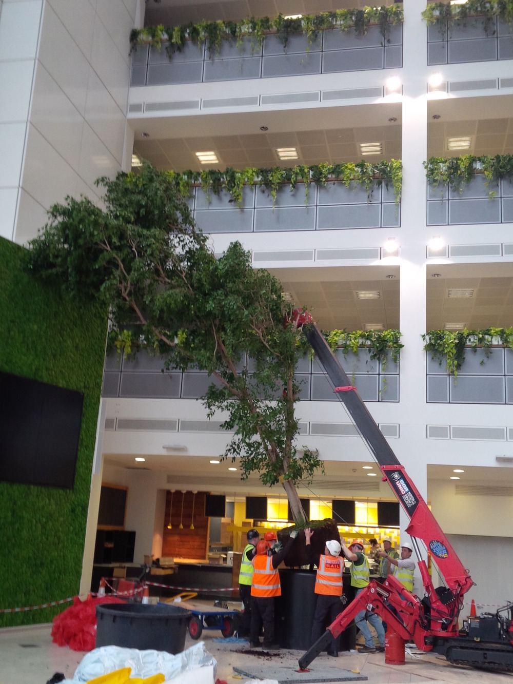ovo-energy-plantcare-interior-plants-office-eco-friendly-trees-bristol-cardiff-image-5