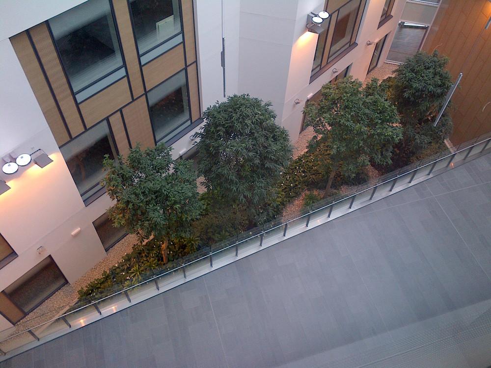 southmead-hospital-plantcare-interior-plants-trees-bristol-image-1