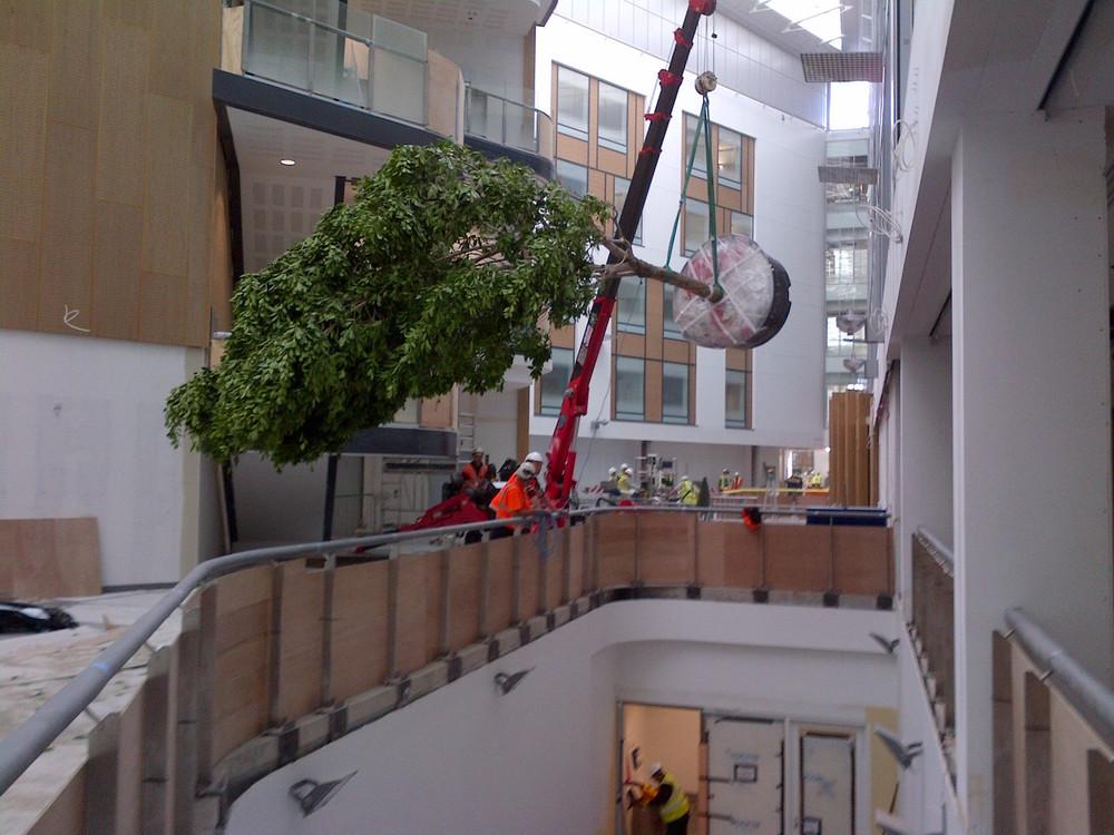 southmead-hospital-plantcare-interior-plants-trees-bristol-image-5