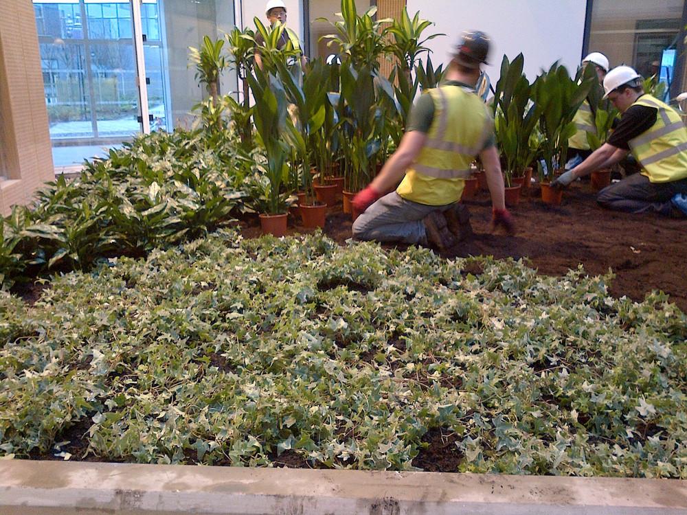 southmead-hospital-plantcare-interior-plants-trees-bristol-image-6