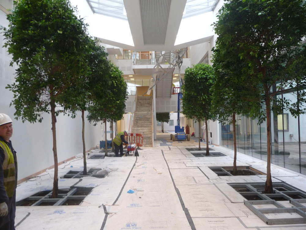 bristol-royal-infirmary-hospital-plantcare-interior-plants-trees-bristol-image-4