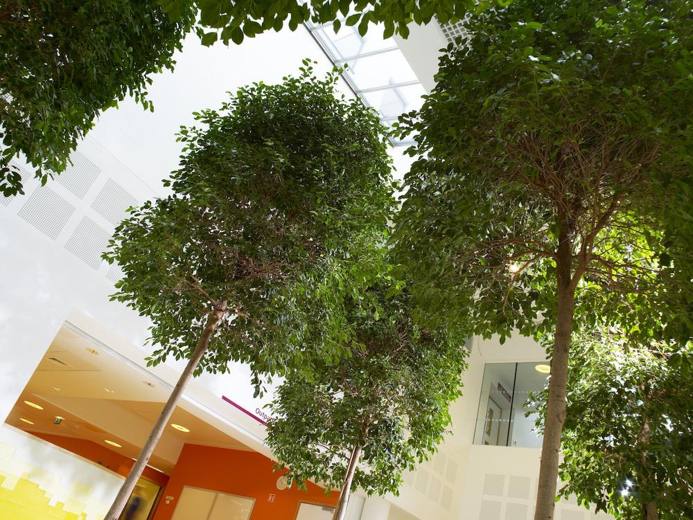 bristol-royal-infirmary-hospital-plantcare-interior-plants-trees-bristol-image-6