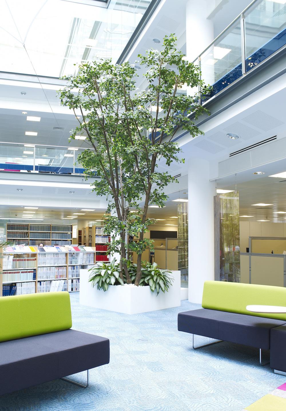 dac-beachcroft-plantcare-interior-plants-trees-bristol-image-1