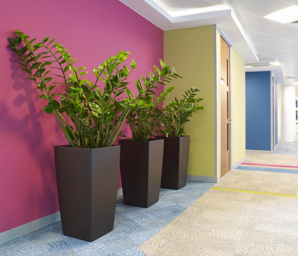 dac-beachcroft-plantcare-interior-plants-trees-bristol-image-2
