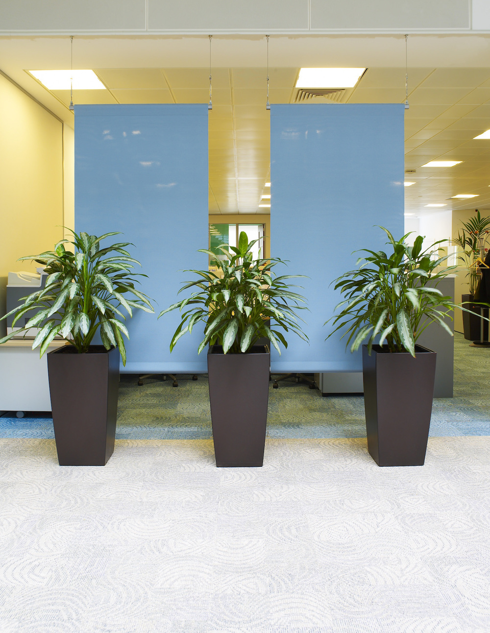dac-beachcroft-plantcare-interior-plants-trees-bristol-image-3