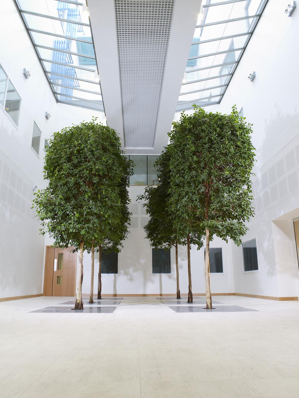 Etonnant Interior Trees Plantcare Bristol Cardiff Interiorscapes Eco Friendly