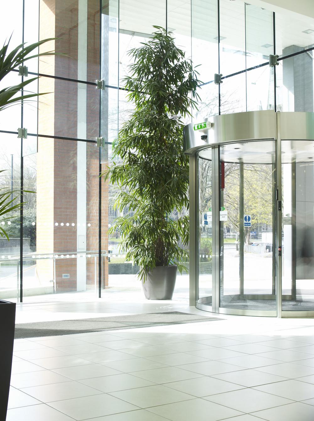 Exceptionnel Interior Trees Plantcare Bristol Cardiff Interiorscapes Eco Friendly