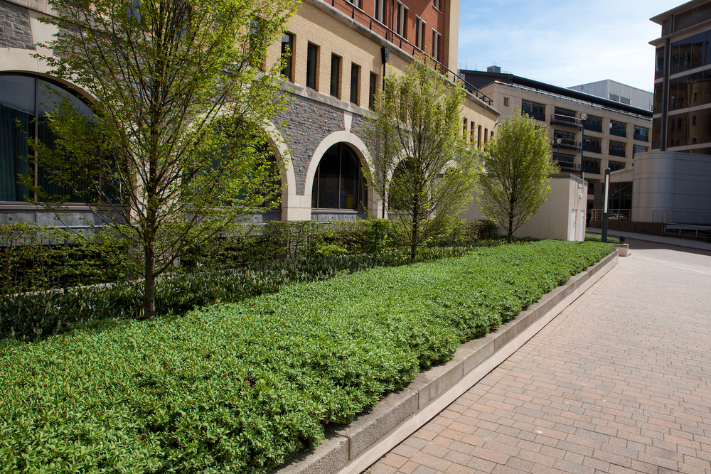 soft-landscaping-plantcare-bristol-cardiff-outside-exterior-corporate-office-workspace-2