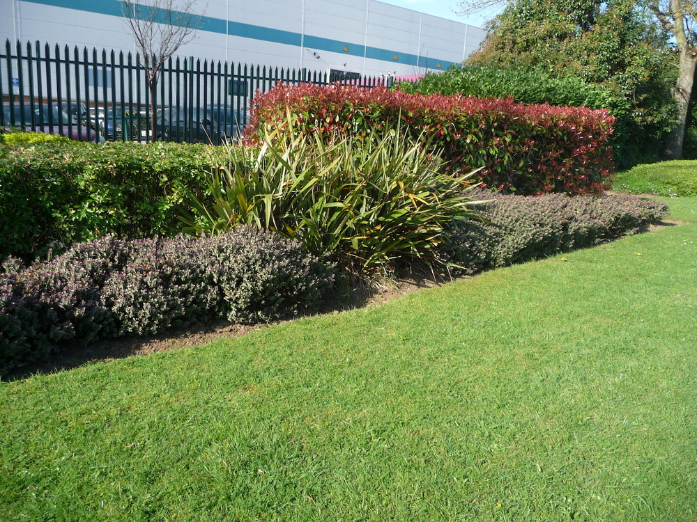 soft-landscaping-plantcare-bristol-cardiff-outside-exterior-corporate-office-workspace-4
