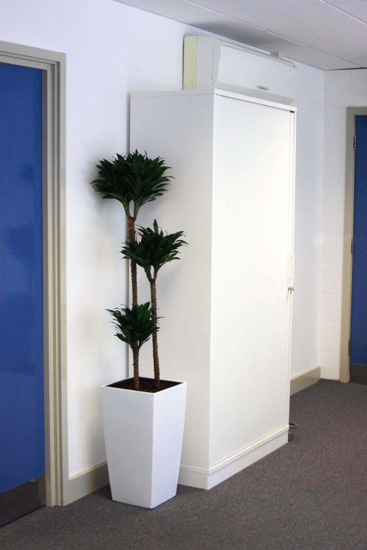 medaco-plantcare-interior-plants-trees-bristol-image-3