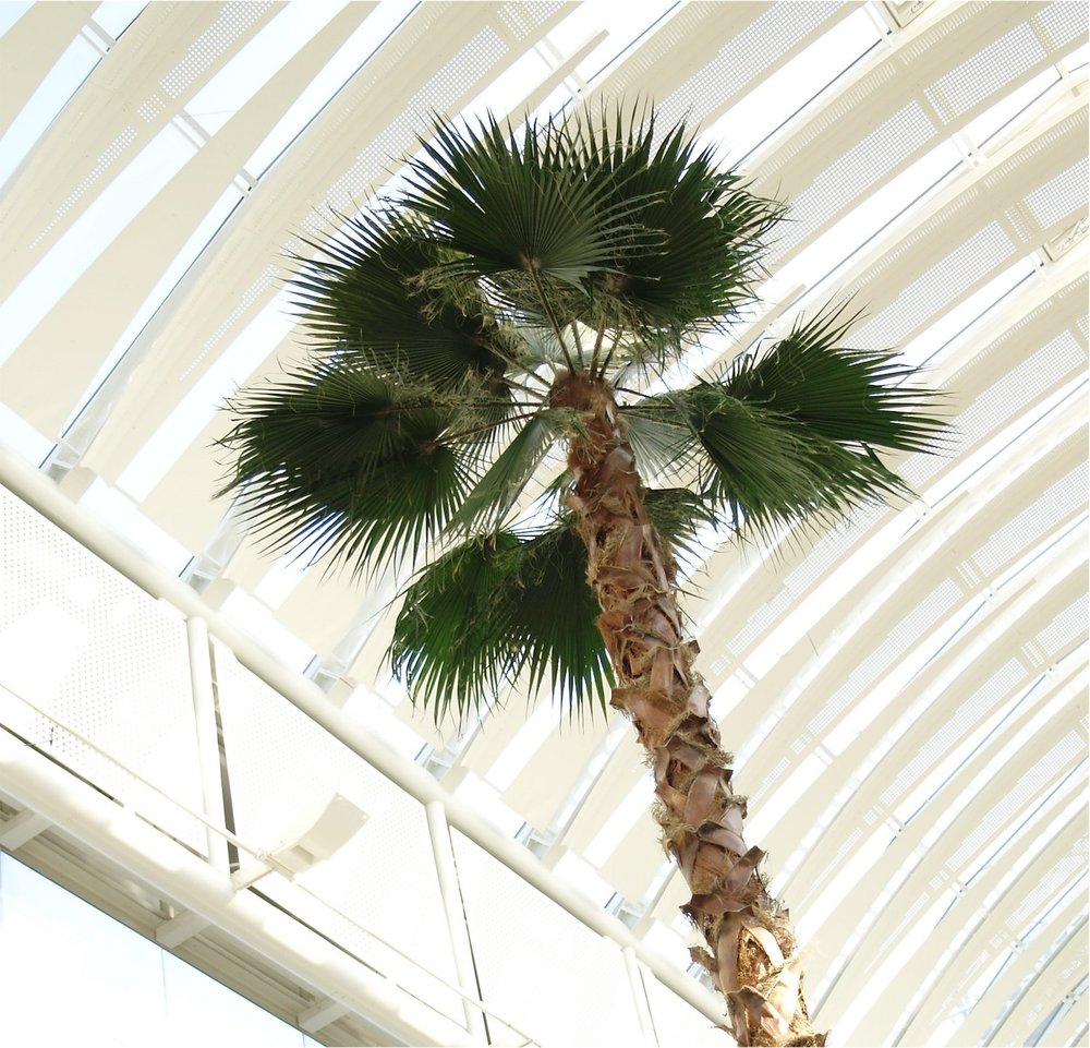 the-mall-cribbs-causeway-plantcare-interior-plants-trees-bristol-image-2