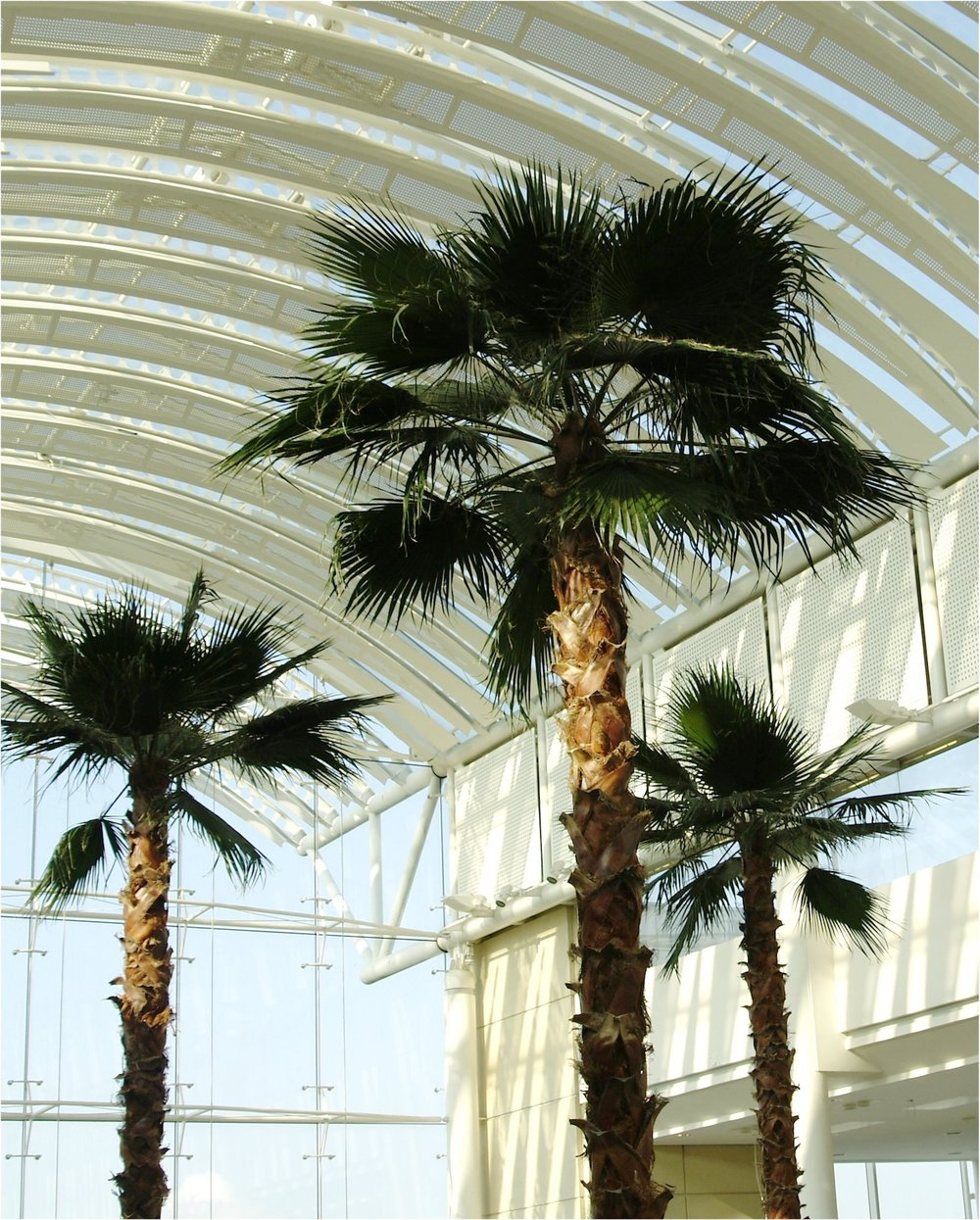 the-mall-cribbs-causeway-plantcare-interior-plants-trees-bristol-image-4