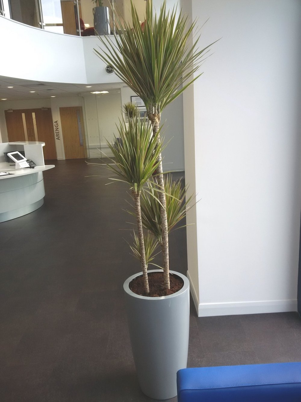 hill-brush-plantcare-interior-plants-trees-bristol-image-3