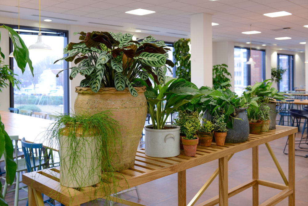ovo-energy-2-plantcare-interior-plants-office-eco-friendly-trees-bristol-cardiff-image-7