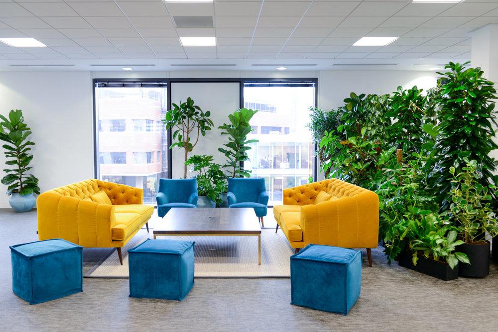 ovo-energy-2-plantcare-interior-plants-office-eco-friendly-trees-bristol-cardiff-image-11