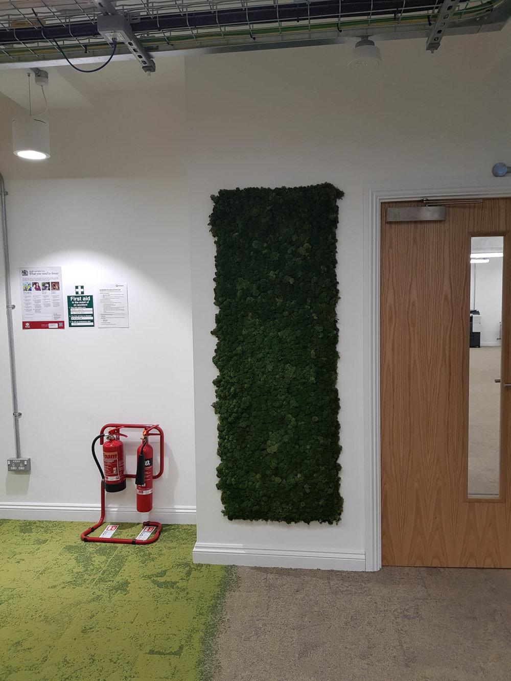 cookpad-interior-plants-mosswalls-branded-planters-plantcare-bristol-image-1