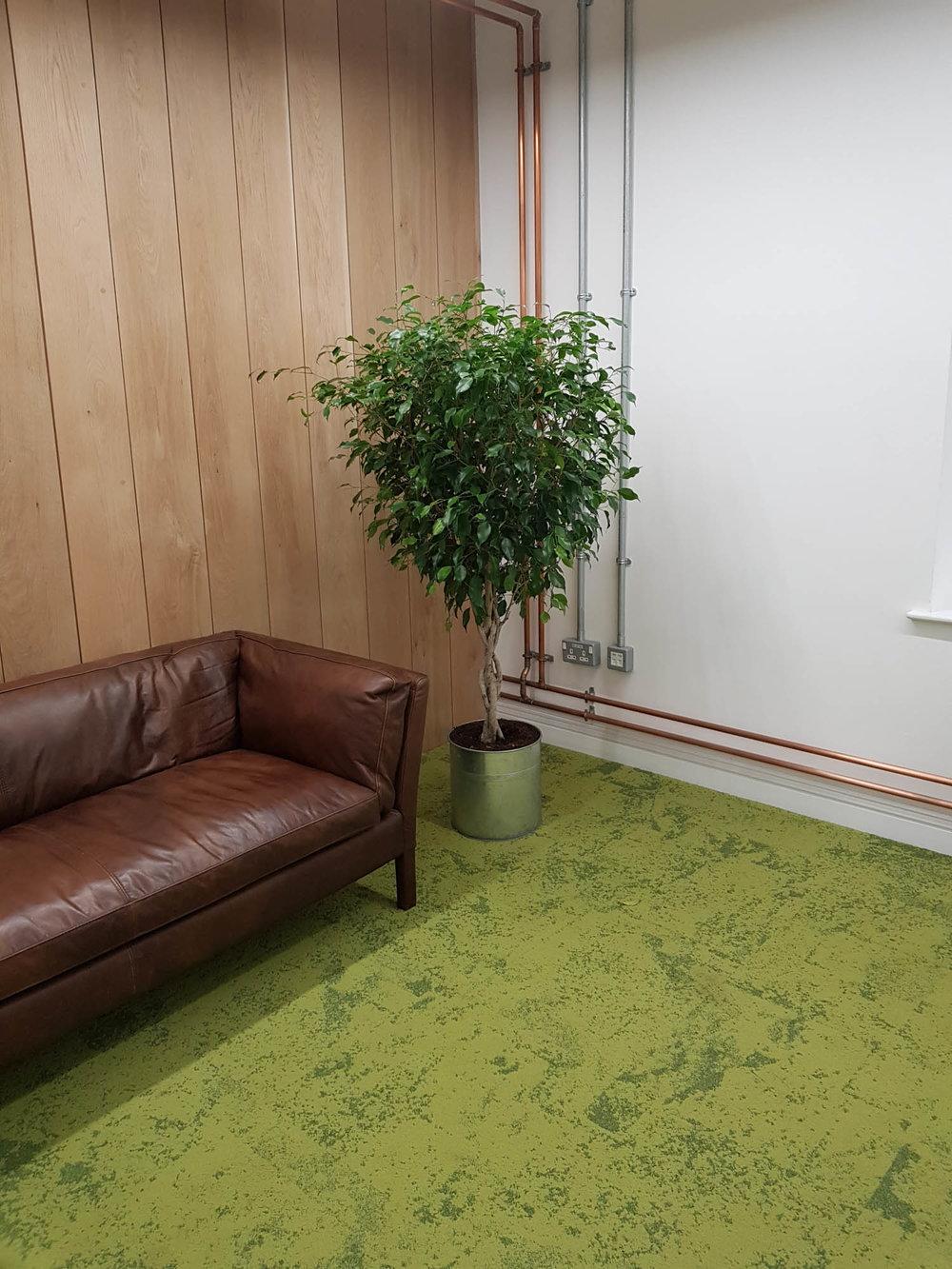 cookpad-interior-plants-mosswalls-branded-planters-plantcare-bristol-image-4