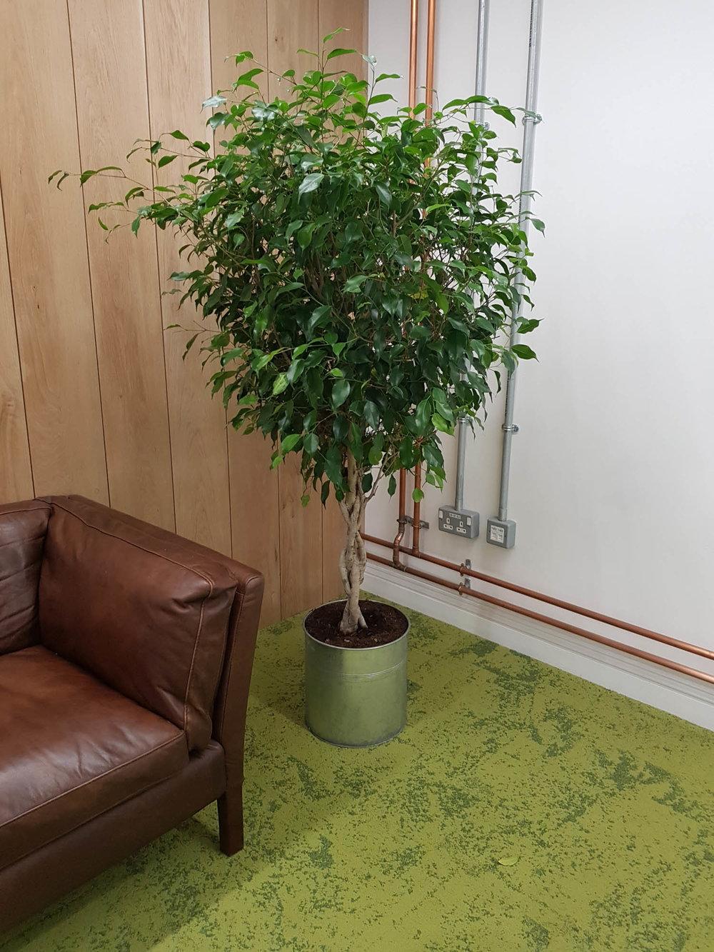 cookpad-interior-plants-mosswalls-branded-planters-plantcare-bristol-image-5
