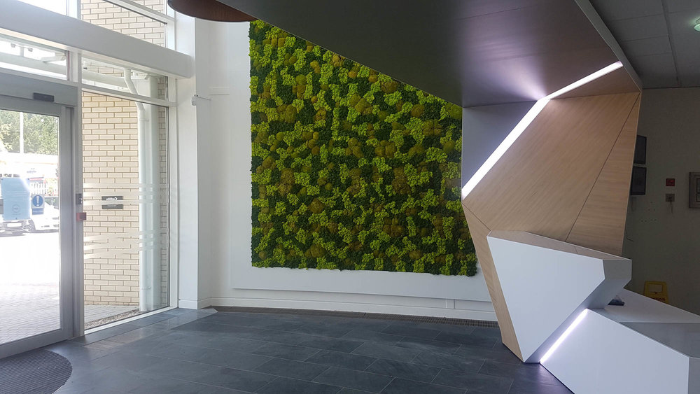 utilita-mosswall-bespoke-custom-plantcare-bristol-image-5