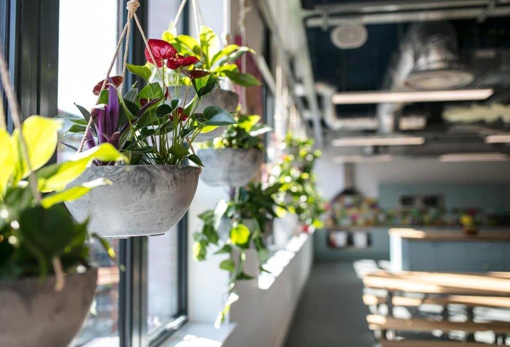 Pukka-herbs-bristol-office-plants.jpg