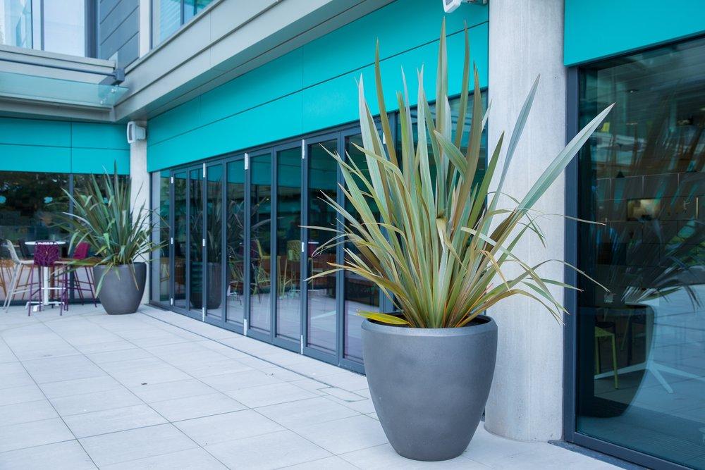exterior-planting-terrace-planting.jpg