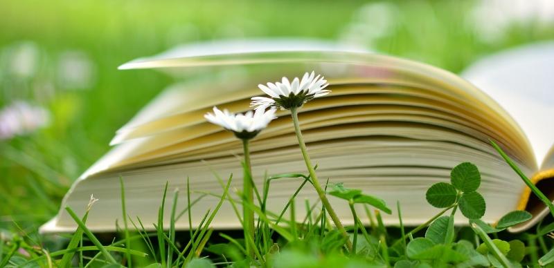 book-2304389_1280.jpg