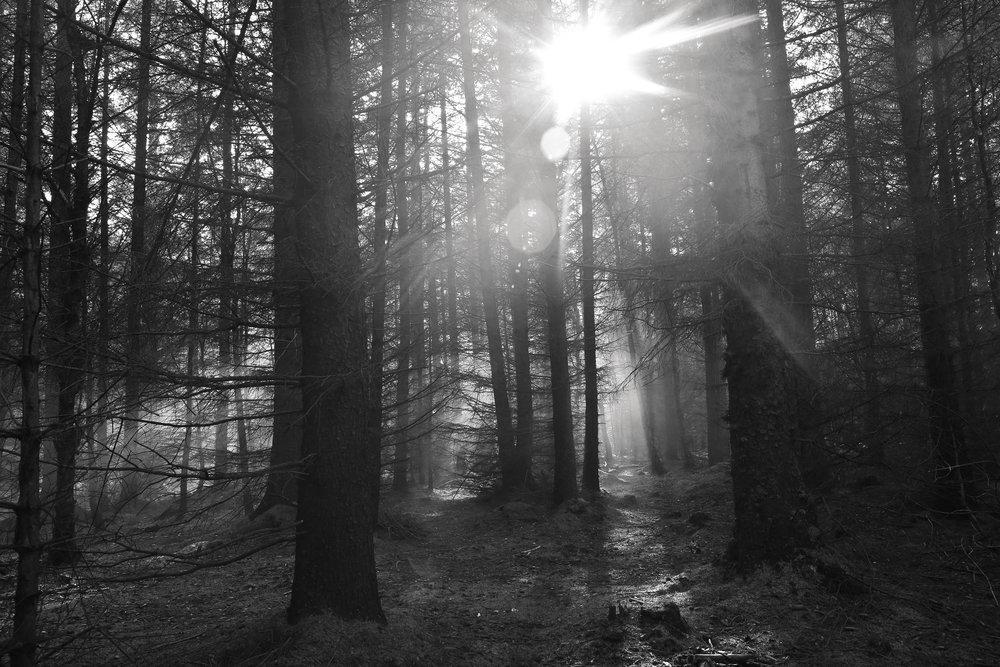 IMG_7430_SmokeShoot_Rachael_Sture_Photography_3-10-16_.jpg