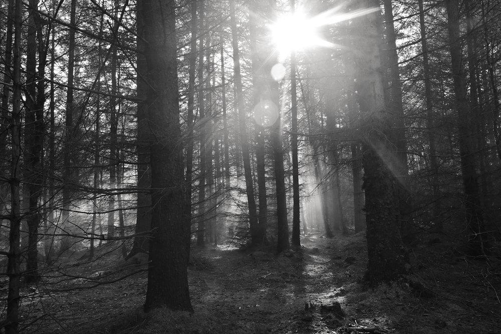 IMG_7430_Smoke_shoot_Rachael_Sture_Photography_3-10-16_.jpg