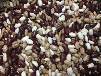 Pinto, Northern and Kidney Beans, all part of our Ezekiel Bread.