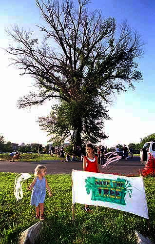 """Save the Tree"" at 8th & Rhode Island, 2003"