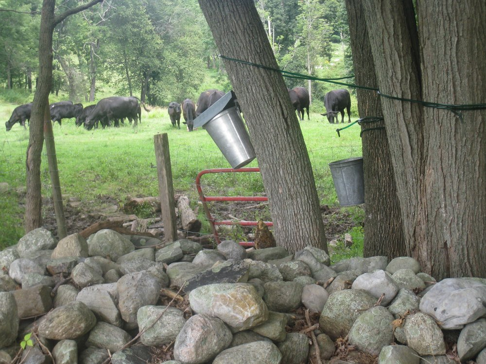 2-Cows&Pails.jpg