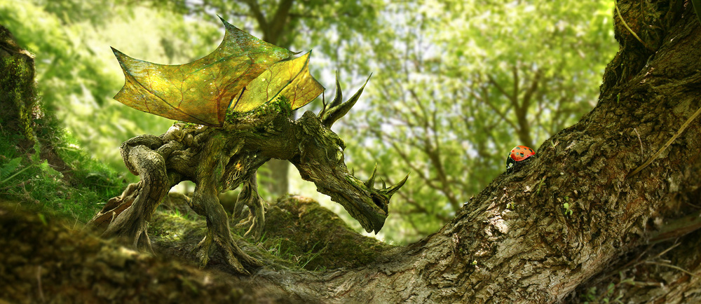 The Wood Dragon & The Ladybird by Phil McDarby