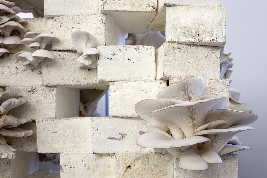 Copy of mushroom_wr_07.jpg