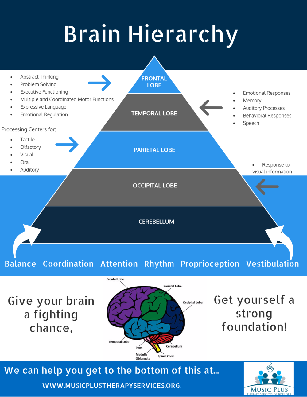BRAIN+HIERARCHY.png