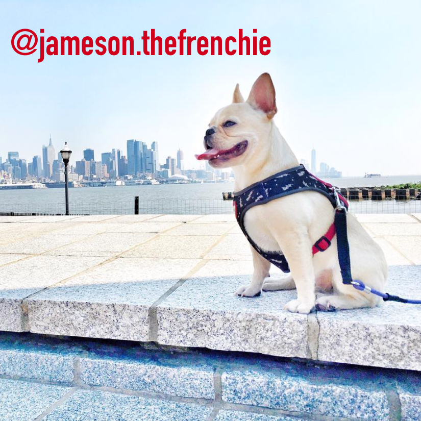 @jameson.thefrenchie