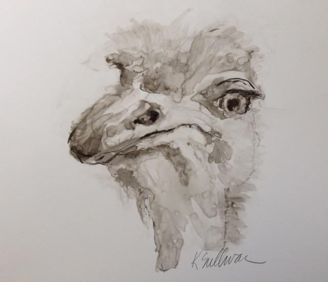ostrich, ink 12x9.jpg