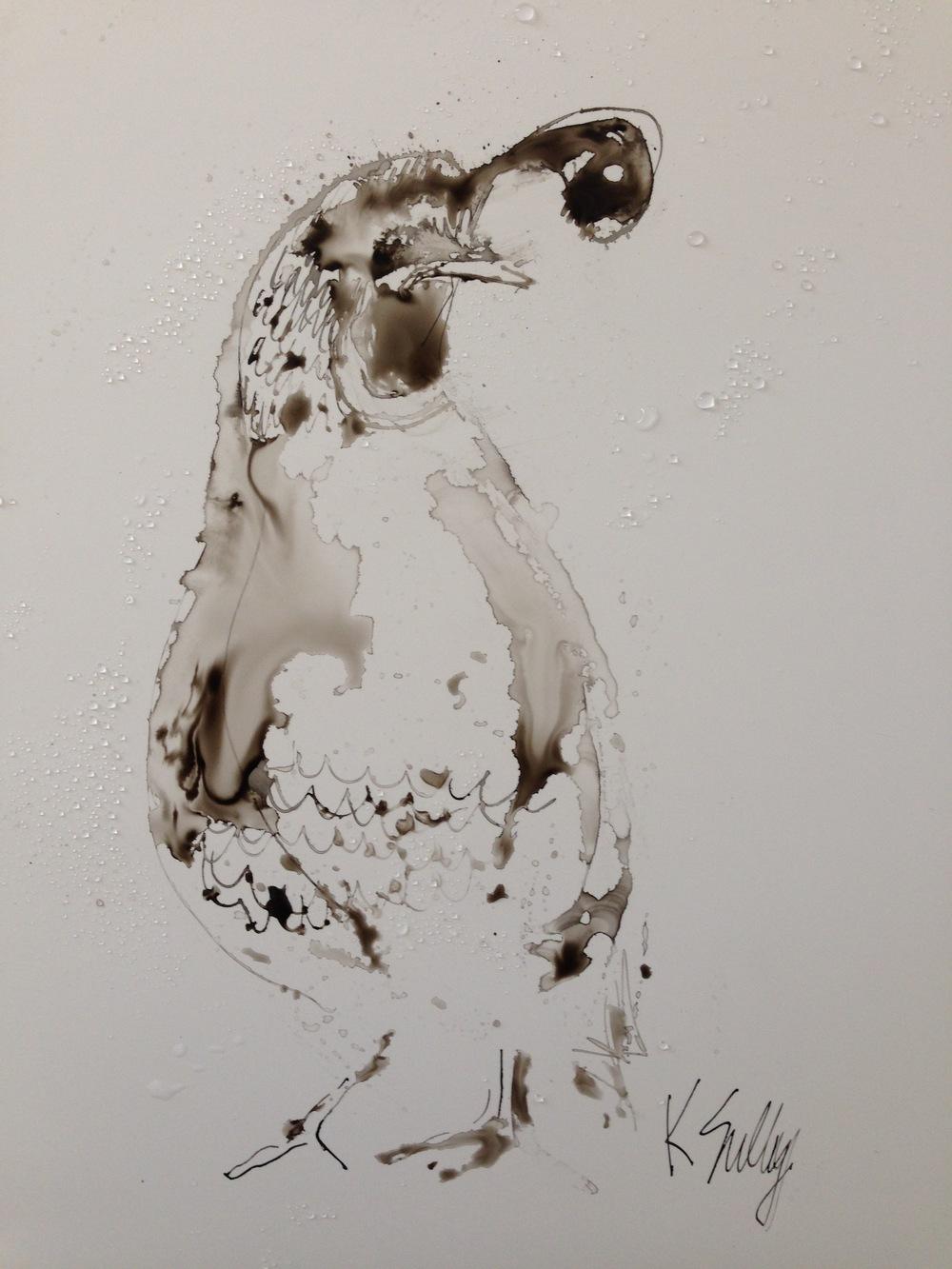 quail, ink 12x9.jpg
