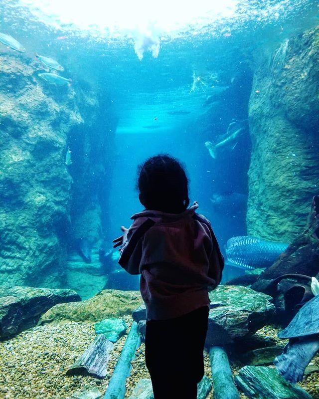 Maison loves the aquarium! One of his favorite places to be. . . . . . #dallas #igtexas #momswithcameras #vscogram #aquarium