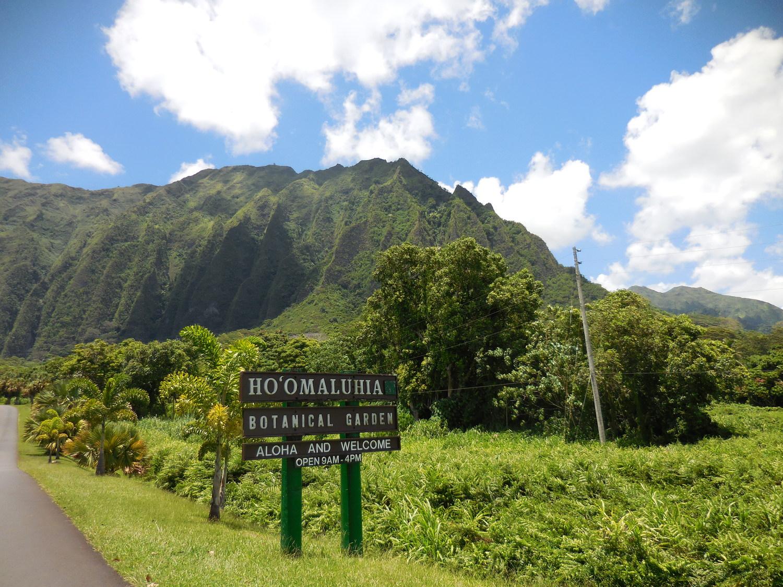 Travel Activities: Aloha Stadium Swap Meet & Marketplace
