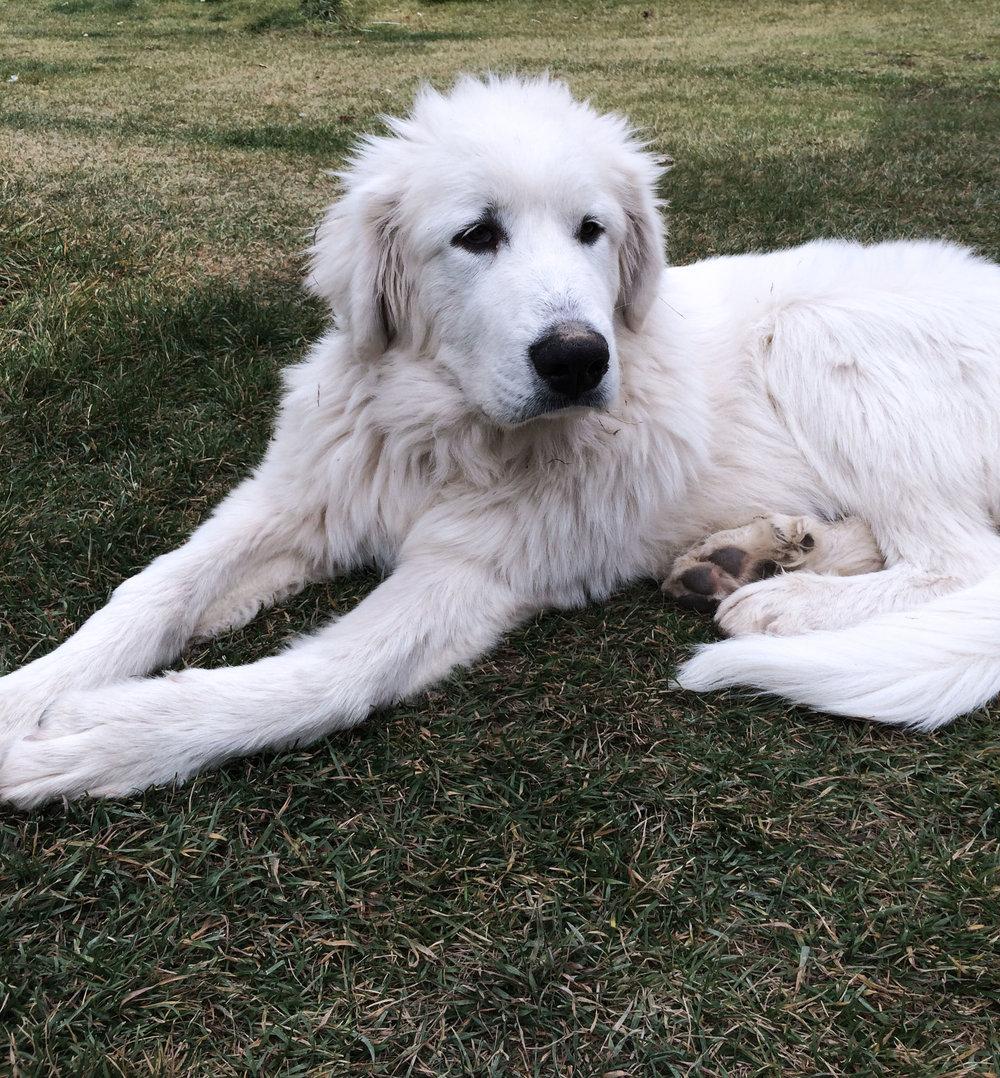 Duke, the cutie we met in Polebridge.