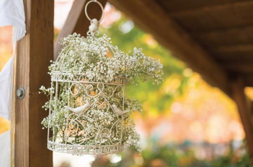 1028    Cage d'oiseaux / Birdcages    2