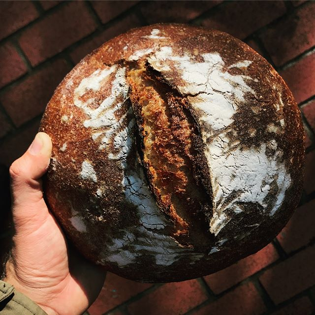Beautiful einkorn wheat sourdough loaf by Ancient Grains available today till noon at the @lafayettefarmersmkt. 🍞 Swipe left to see the perfect chewy crumb inside. #ancientgrains #einkorn #sourdough #baker #lafayette #farmersmarket #crumbshot #toast #sandwichesallday #dailybread