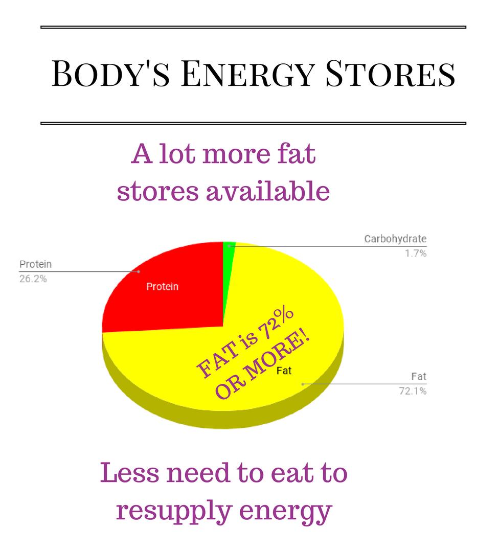 body energy stores